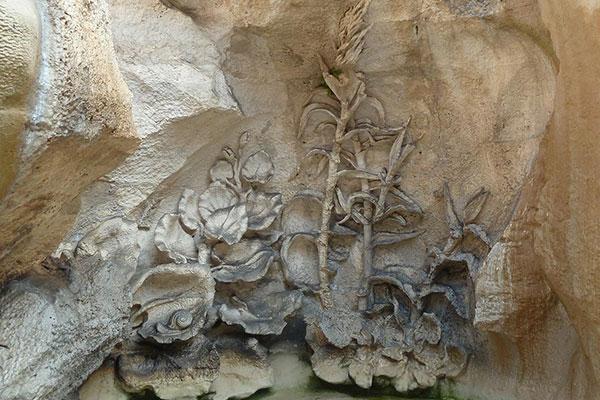 pianta-rocce